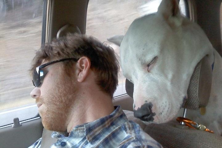 funny-dog-sleeping-in-car-20150601004822-556babd6340e2