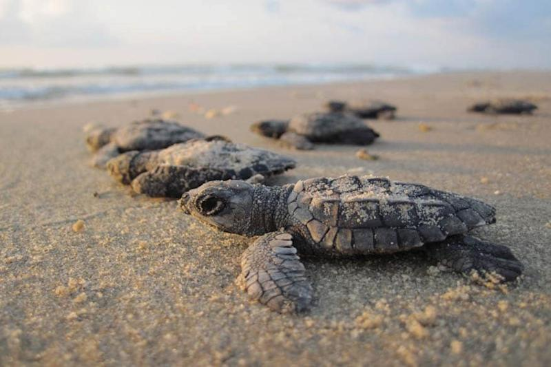 All You Need to Know About World Turtle Day 2020