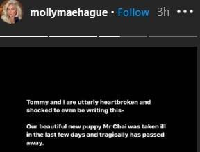 Molly-Mae Hague told her 4.2m followers she is heartbroken over the death of her puppy. (Instagram)