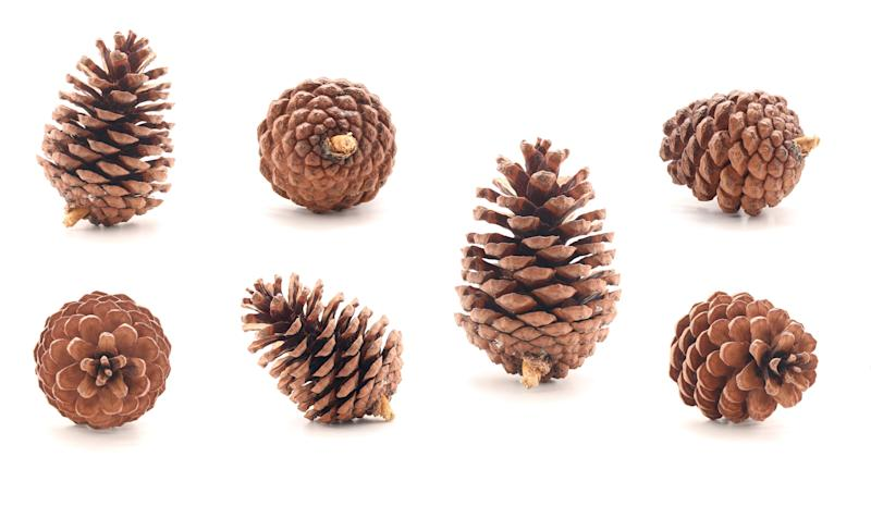 Pine cone tree fruits isolate on white background (Photo: studio2013 via Getty Images)