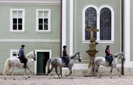 Employees of The National Stud  Kladruby nad Labem ride horses at a farm in the town of Kladruby nad Labem