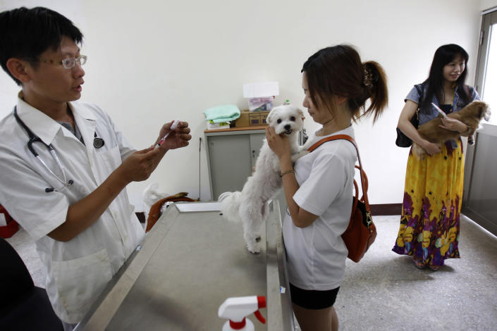 A veterinarian prepares to vaccinate dogs for rabies at a government clinic in Taipei, Taiwan, Thursday, Aug. 1, 2013. Taiwan has ordered tens of thousands of vaccine doses to protect people against the island's first rabies outbreak in more than 50 years. (AP Photo/Wally Santana)