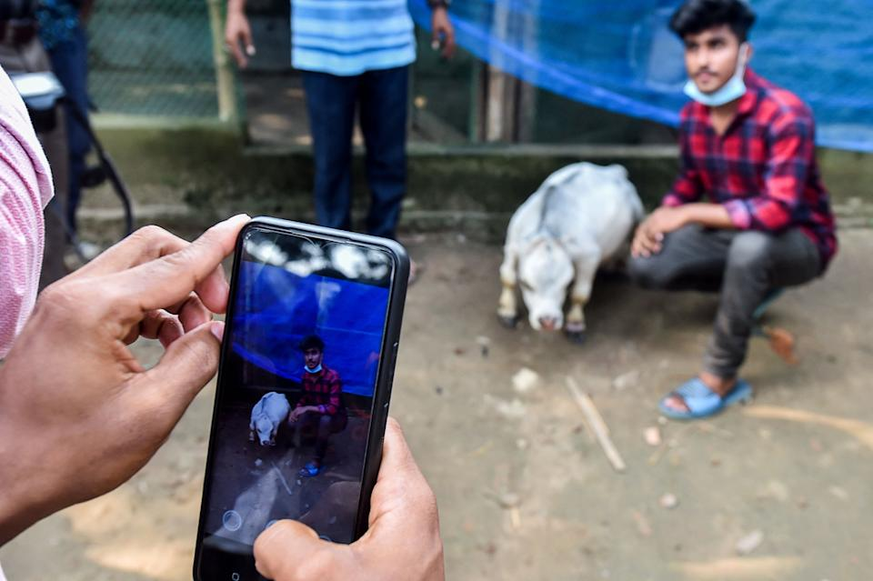 People take pictures with a dwarf cow named Rani, whose owners applied to the Guinness Book of Records claiming it to be the smallest cow in the world, at a cattle farm in Charigram, about 25 km from Savar on July 6, 2021. (Photo by Munir Uz zaman / AFP) (Photo by MUNIR UZ ZAMAN/AFP via Getty Images)