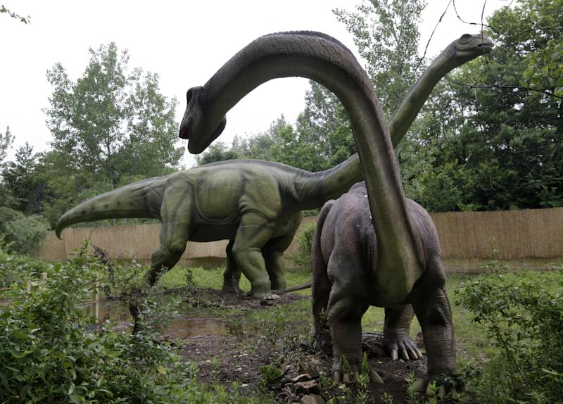An Apatosaurus display is seen at Field Station Dinosaurs in Secaucus, N.J., Friday, May 25, 2012. There will be 31 types of life-sized dinosasurs displayed at the Jurassic expedition that opens Saturday, May 26. (AP Photo/Mel Evans)