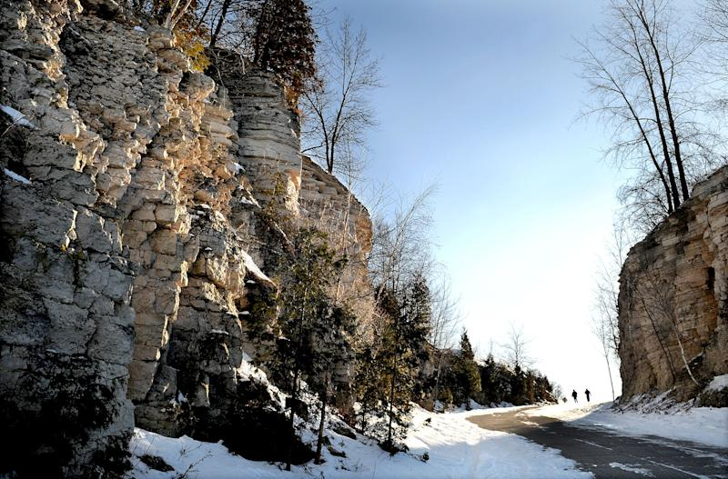 The rocky cliffs of the Niagara Escarpment are a poor environment for a tree. But trees that do take root on the side of a cliff are among the world's oldest living organisms.