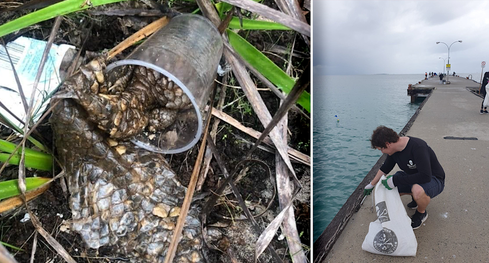 The decomposing lizard was picked up along with 70kg of garbage. Source: Sea Shepherd