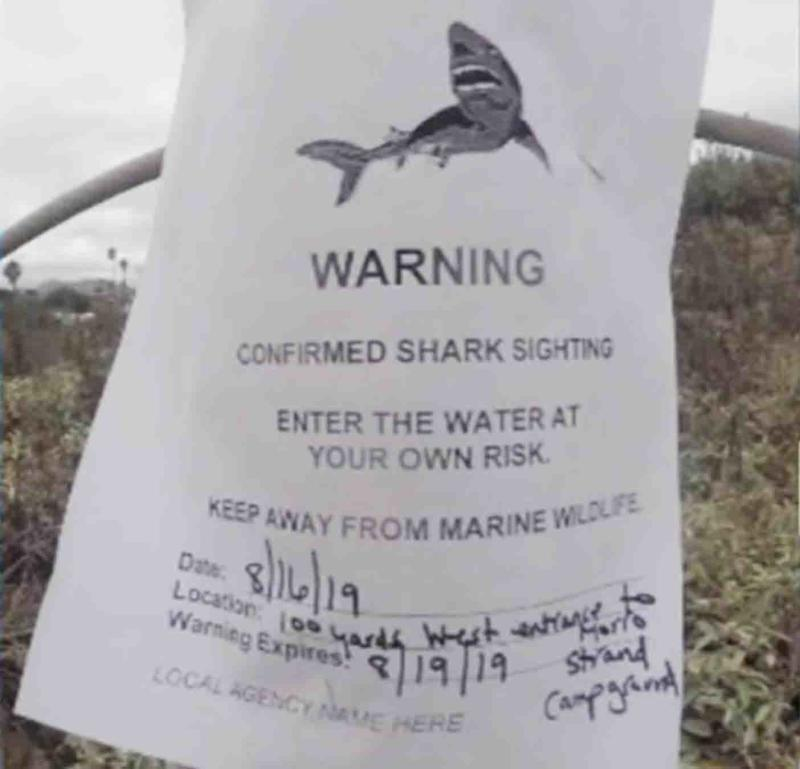 The paper sign posted at the beach, warning about the recent sightings.