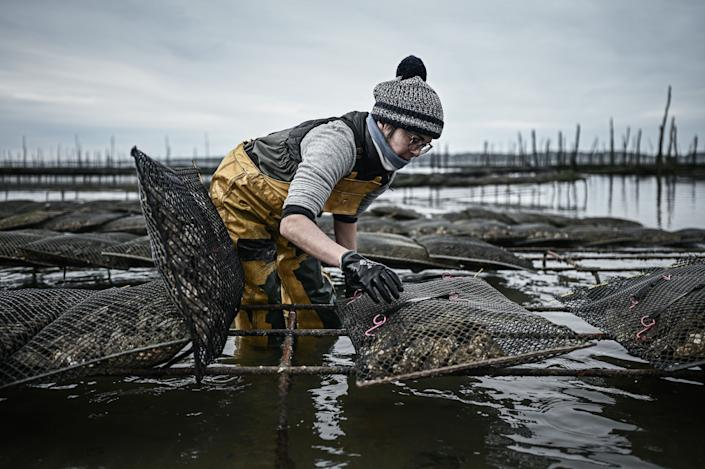 French oyster farmer Anne Marquet collects oysters bags at her oyster farm off the port of La Teste on December 1, 2020 in the bay of Arcachon. (Photo by PHILIPPE LOPEZ/AFP via Getty)
