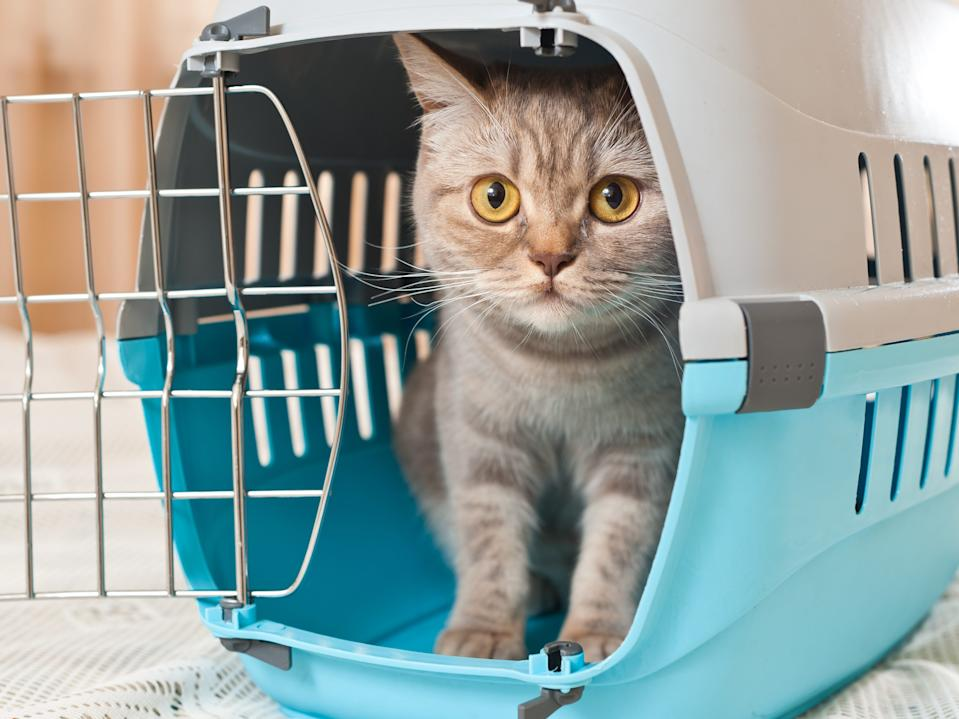 cat pet carrying cage