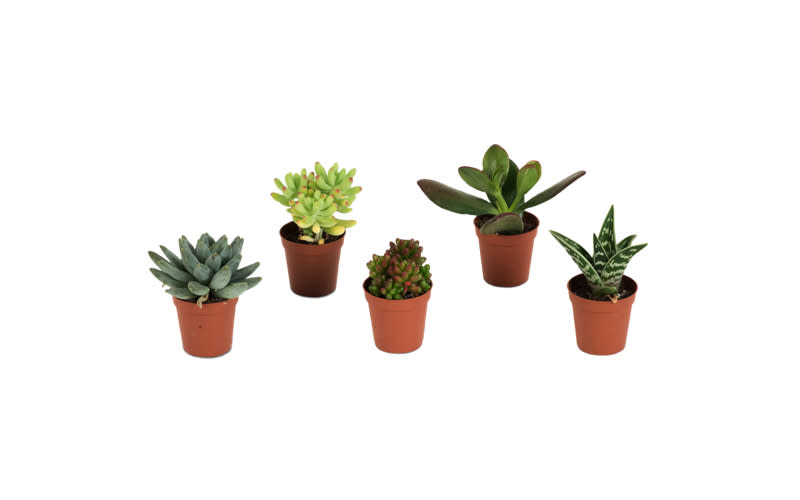 "<p><a rel=""nofollow"" href=""https://patch.garden/plants/succulent-57/""><em>Patch, from £3</em></a> </p>"