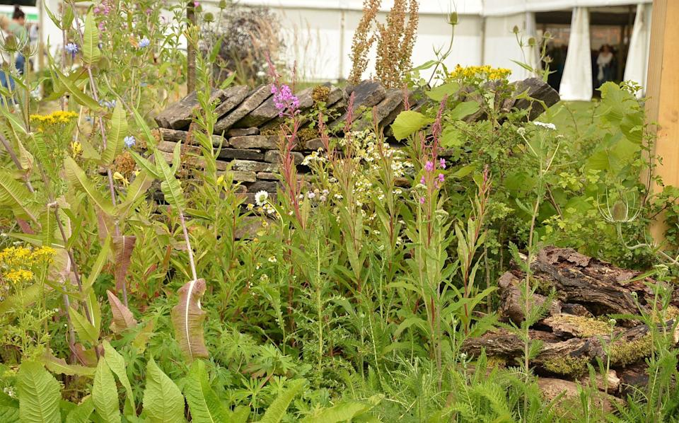 The judges at RHS Flower Show Tatton Park, in Cheshire, have awarded a gold medal to a garden full of weeds