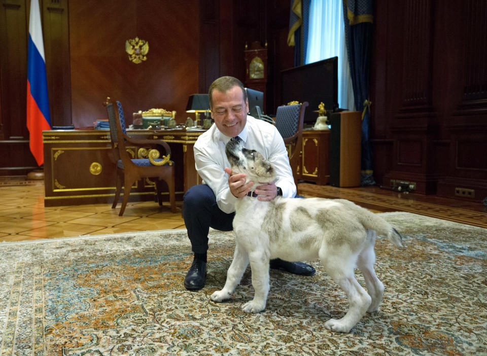FILE - In this file photo dated Tuesday, Aug. 13, 2019, Russian Prime Minister Dmitry Medvedev pets an Alabai puppy, presented to him by Turkmenistan's President Gurnbanguly Berdymukhamedov in his Gorky residence outside Moscow, Russia. Berdymukhamedov has published a book about the Alabai breed and has presented Russian President Vladimir Putin and Prime Minister Medvedev with an Alabai puppy, and according to news reports Tuesday Jan. 26, 2021, he has now declared a national holiday to honor the local dog breed. (Yekaterina Shtukina, Sputnik, Government Pool Photo via AP, FILE)
