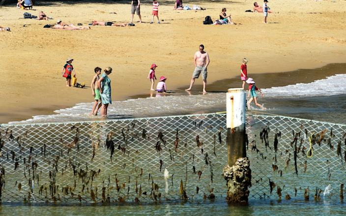 A shark net protects children as they plat on a beach in Manly Cove, Sydney - AFP/William West