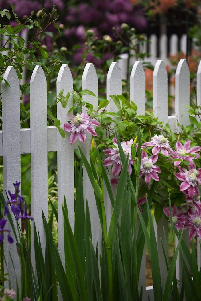 "<p>This charming wooden fence works in a variety of garden settings, such as colonial or cottage. It provides some privacy, especially with plants placed very close on either side.</p><p> <a class=""link rapid-noclick-resp"" href=""https://go.redirectingat.com?id=74968X1596630&url=https%3A%2F%2Fwww.homedepot.com%2Fp%2FOutdoor-Essentials-3-1-2-ft-x-6-ft-Western-Red-Cedar-French-Gothic-Fence-Panel-Kit-240396%2F206934909&sref=https%3A%2F%2Fwww.thepioneerwoman.com%2Fhome-lifestyle%2Fgardening%2Fg32651791%2Fdecorative-garden-fence-ideas%2F"" rel=""nofollow noopener"" target=""_blank"" data-ylk=""slk:SHOP WOOD PICKET FENCE PANEL"">SHOP WOOD PICKET FENCE PANEL</a></p>"