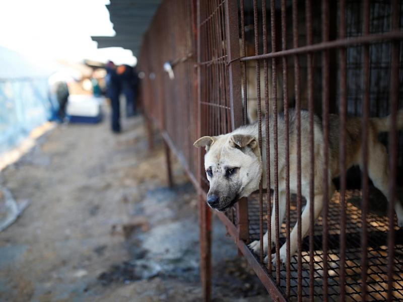A dog is pictured in a cage at a canine meat farm in Wonju, South Korea, 10 January 2017: REUTERS/Kim Hong-Ji