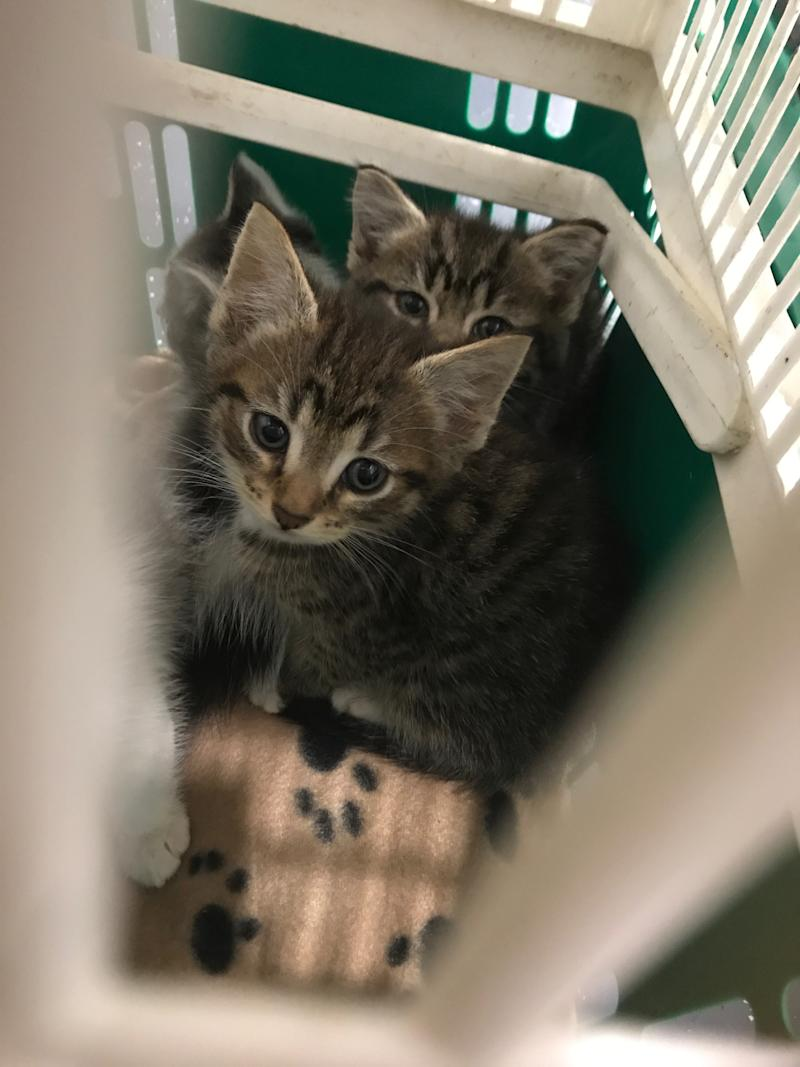 The two females and two male kittens were presumed to be about six weeks old. Source: RSPCA SA