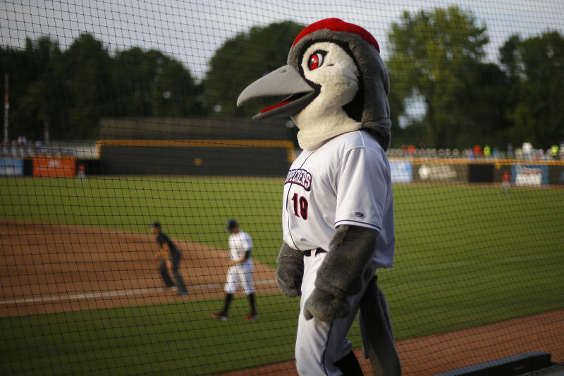 Bunker, the team mascot of the Fayetteville Woodpeckers minor league baseball team, watches the action during a game in Fayetteville, N.C., on Sunday, July 28, 2019. The region, which was once fiercely opposed to the listing of the red-cockaded woodpecker on the Endangered Species Act, has begun to embrace the rare bird. (AP Photo/Robert F. Bukaty)