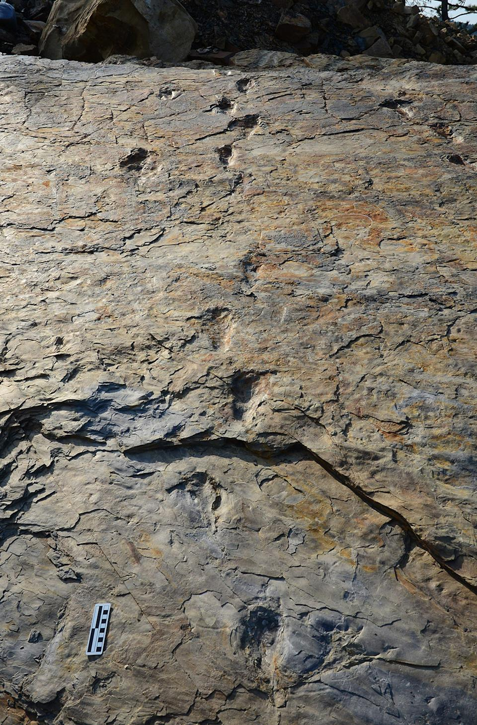 South Korea has a huge variety of fossil paths - but relatively few fossil bones