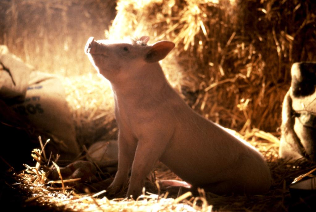 """<a href=""""http://movies.yahoo.com/movie/1800020413/info"""">Babe</a> (1995): This is a movie about a talking pig -- a talking pig, people! -- that was nominated for seven Academy Awards, including best picture and best actor for James Cromwell. (It won one, for visual effects.) That's how good it is. Director and co-writer Chris Noonan's film about a pig who learns how to herd sheep is so sweet, so funny, so unexpectedly touching, it never hits a false note. As voiced by Christine Cavanaugh, Babe might just be the most earnest, most adorable creature ever. That he befriends sheepdogs, horses, ducks and humans alike is only part of his charm. A childlike sense of wonder and the attitude that anything is possible round out his allure."""