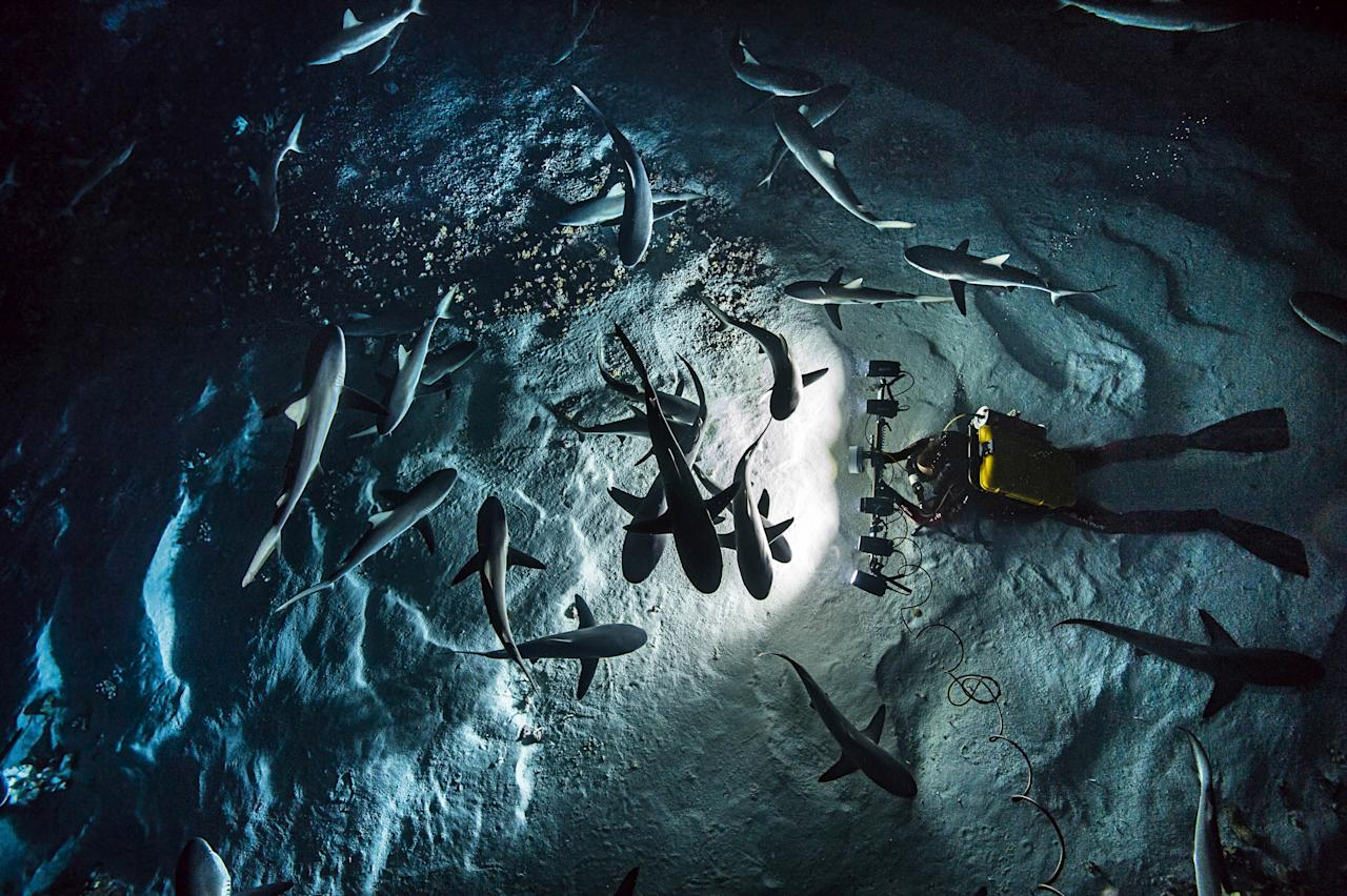 <p>One committed photographer spent a grand total of 3,000 dive hours trying to get the perfect shots, capturing beautiful images of a rare shark feeding frenzy. (Photo: Caters News) </p>