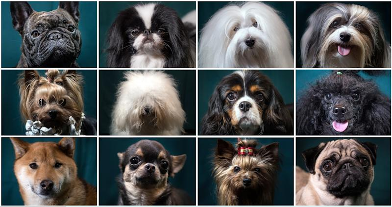 First held in 1891, Crufts is said to be the largest show of its kind in the world - Credit: Getty