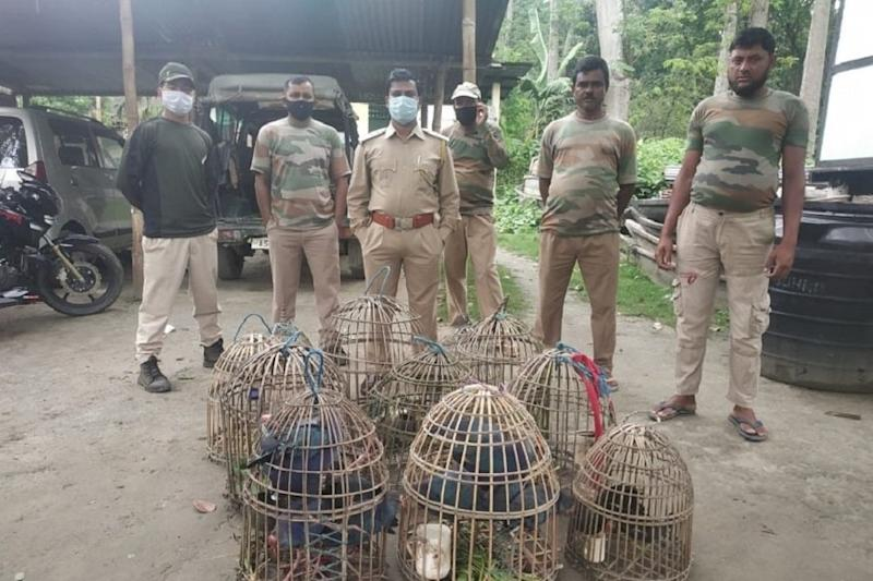 Poaching Cases Surge in Assam Amid Lockdown, Forest Officials Rescue 13 Purple Moorhens Caught for Trade