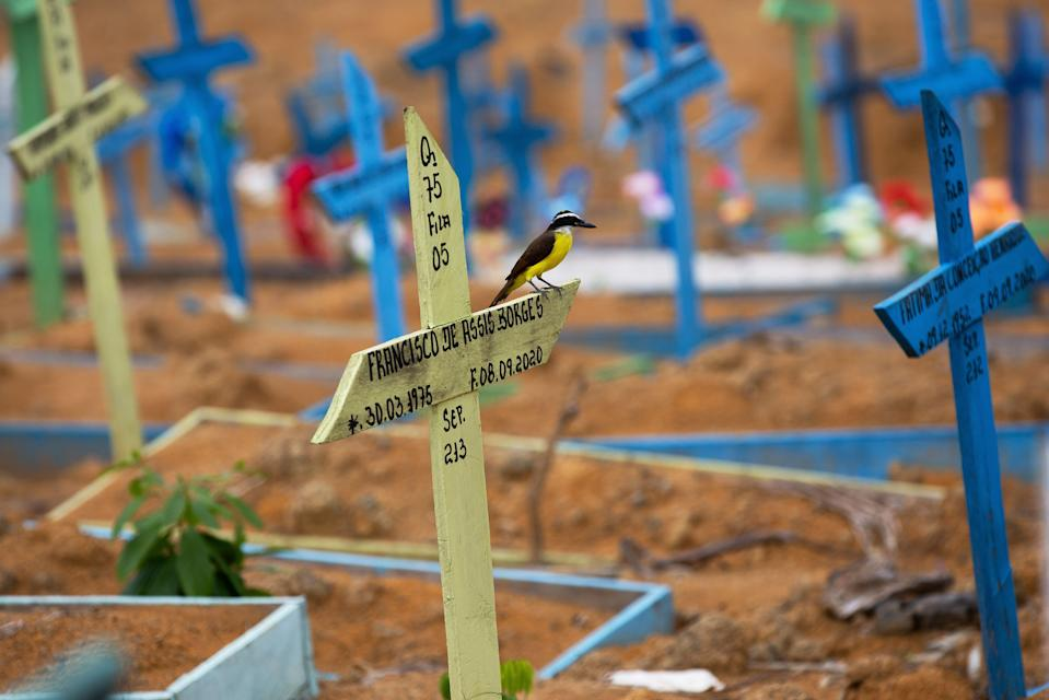 A bird sits on a cross in an area reserved for the burial of COVID-19 victims at the Nossa Senhora Aparecida cemetery, in Manaus, Brazil, on January 5, 2021. (Photo by MICHAEL DANTAS / AFP) (Photo by MICHAEL DANTAS/AFP via Getty Images)