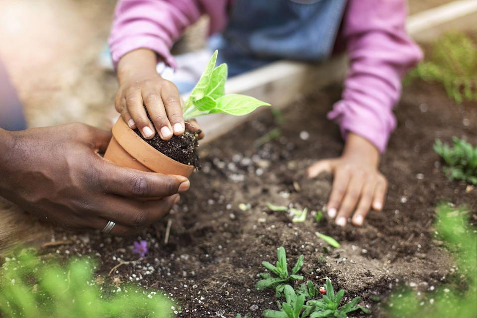 """<p><strong>Gardening is a healthy, fun activity for children of all ages. As well as getting them outside, it will help kids develop new skills, learn about <a href=""""https://www.housebeautiful.com/uk/garden/a36142732/vitamin-g-gardens-green-nature/"""" rel=""""nofollow noopener"""" target=""""_blank"""" data-ylk=""""slk:nature"""" class=""""link rapid-noclick-resp"""">nature</a> and discover the wonder of sprouting seedlings. </strong><strong><br></strong></p><p>'<a href=""""https://www.housebeautiful.com/uk/garden/a36228990/gardening-boosts-wellbeing-rhs/"""" rel=""""nofollow noopener"""" target=""""_blank"""" data-ylk=""""slk:Gardening"""" class=""""link rapid-noclick-resp"""">Gardening</a> and interacting with nature improves kids' creativity since they discover new and exciting ways to grow food,' says Shannen Godwin, a spokesperson for <a href=""""https://www.jparkers.co.uk/"""" rel=""""nofollow noopener"""" target=""""_blank"""" data-ylk=""""slk:J Parker's"""" class=""""link rapid-noclick-resp"""">J Parker's</a>. 'Plus, as they learn about nature and the environment, they're able to reason and get new knowledge about the science of plants, animals, and weather, and how they're all connected.'</p><p>To celebrate National Children's Gardening Week (Sunday 23rd - Monday 31st May), the team at J Parker's have revealed easy child-friendly gardening inspiration for every family to enjoy. Take a look at the five plants to consider growing this half-term...<br></p>"""