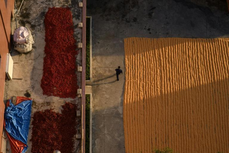 The World Food Proramme, which has the largest international aid presence in North Korea, has said it could cease operaitons in the country due to the absence of food imports