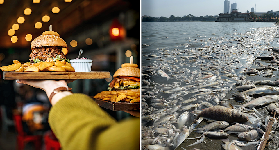 The food choices we make are having an impact on the environment. Source: Getty / File