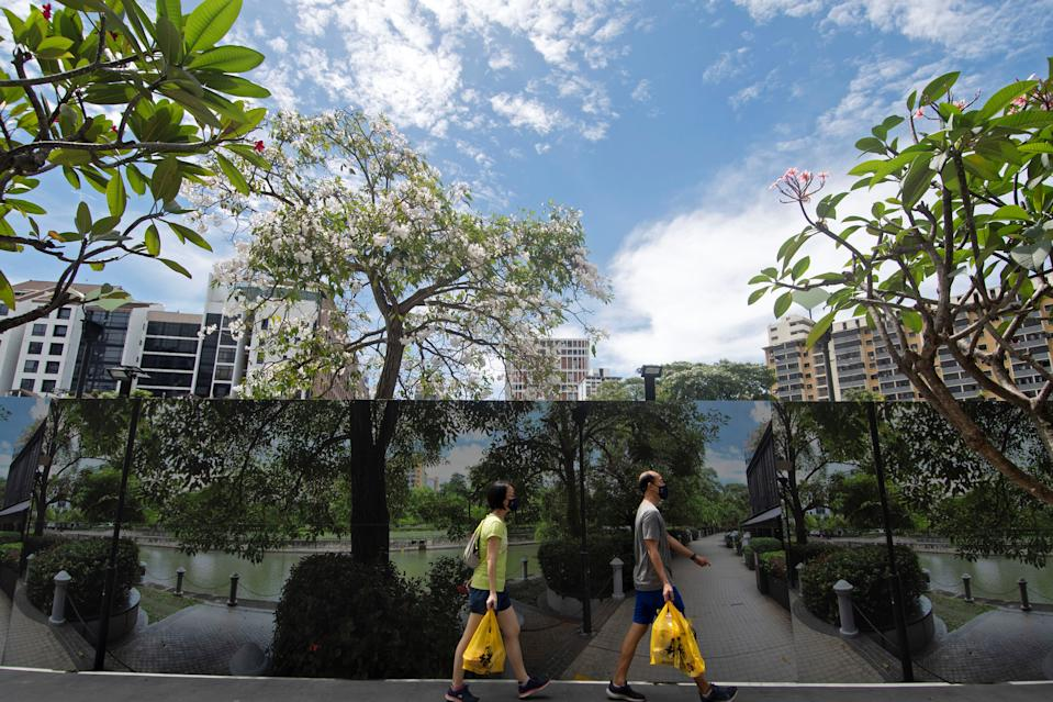 Flowers of trumpet trees seen along the banks of the Singapore River on 26 March. (PHOTO: Getty Images)