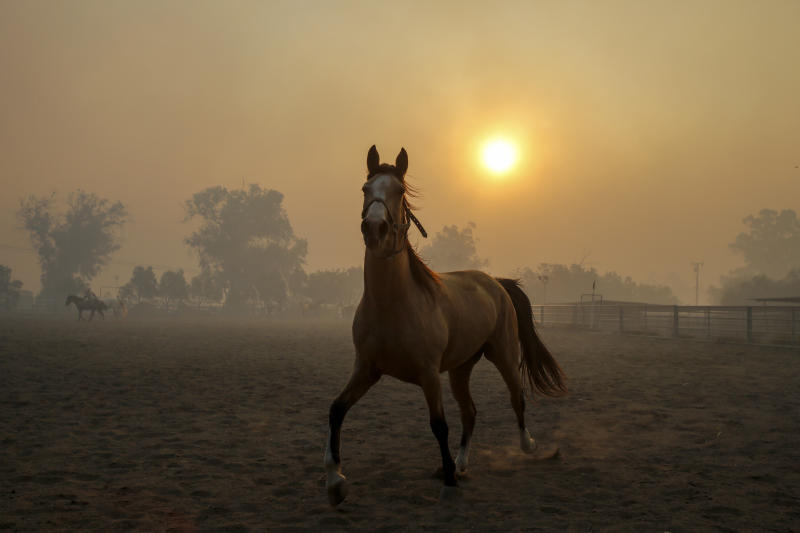 Smoke from wildfires burning in the region fills the air as a horse runs at a ranch in Simi Valley, Calif., Oct. 30, 2019. (Photo: Ringo H.W. Chiu/AP)