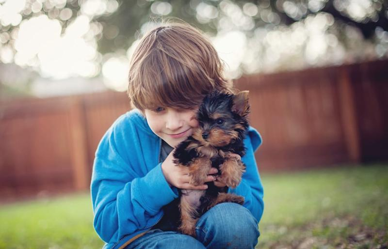 10 Small Dog Breeds That Are Kid-Friendly