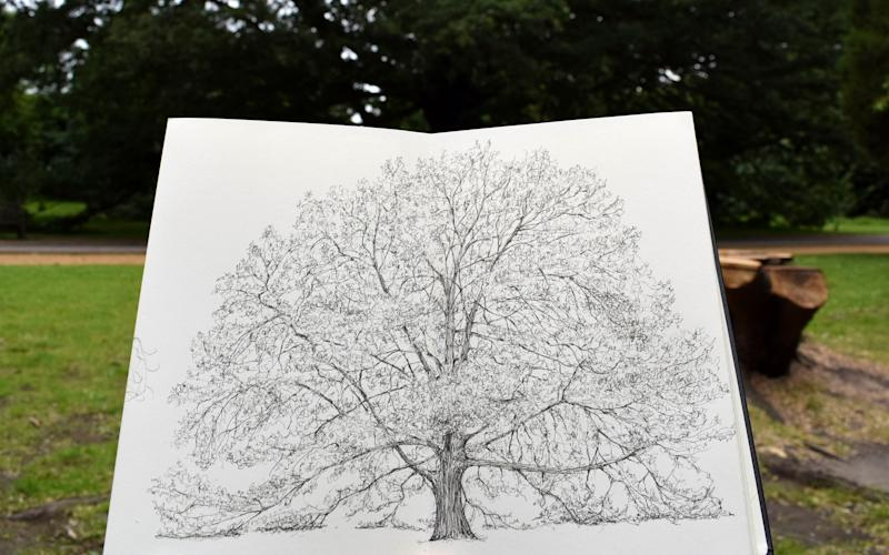 Fifty-four trees are loved by Londoners above all others - Luke Adam Hawker