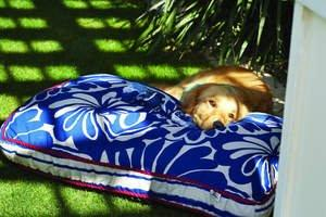 Keep Pets Healthy, Cool During Hot Weather