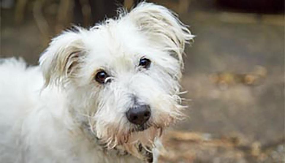Max the terrier is pictured.