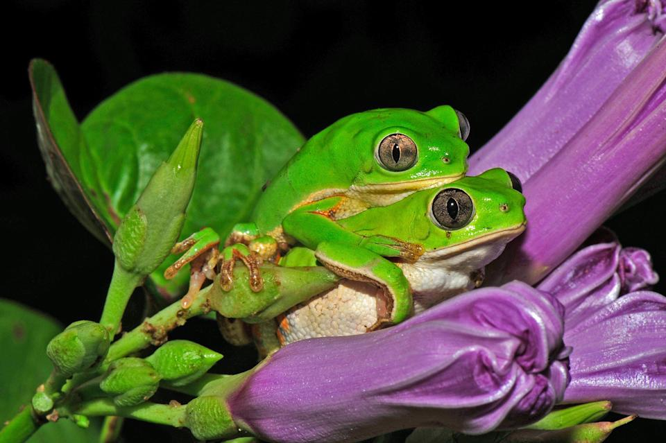 <p>This picture, with its bright contrasting colours, was given an Honorable mention in the Ecology and Environmental Science category. (PA) </p>