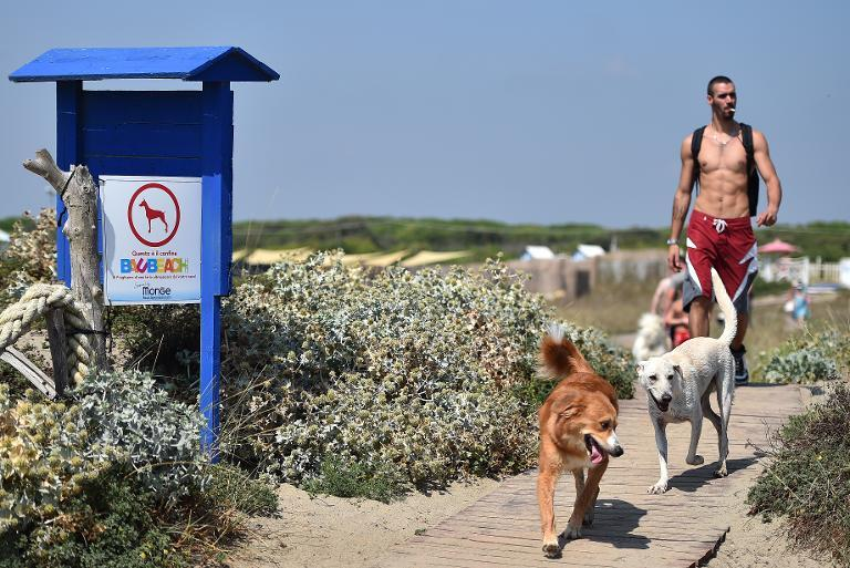 A man arrives with his dogs at Baubeach in Maccarese, near Rome, on August 12, 2014