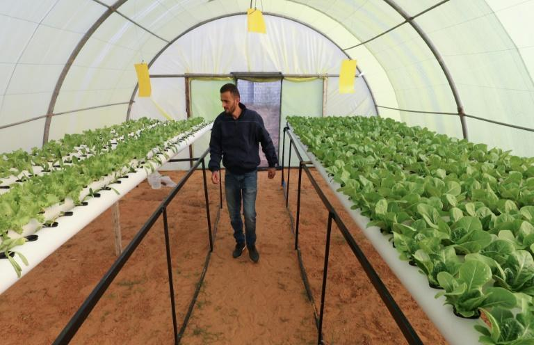 """Zip ties, punctured plastic cups as pots and PVC tubing bought in DIY shops hold the precious crops at """"Green Paradise"""" -- so dubbed by the two young Libyan entrepreneurs spearheading the project"""