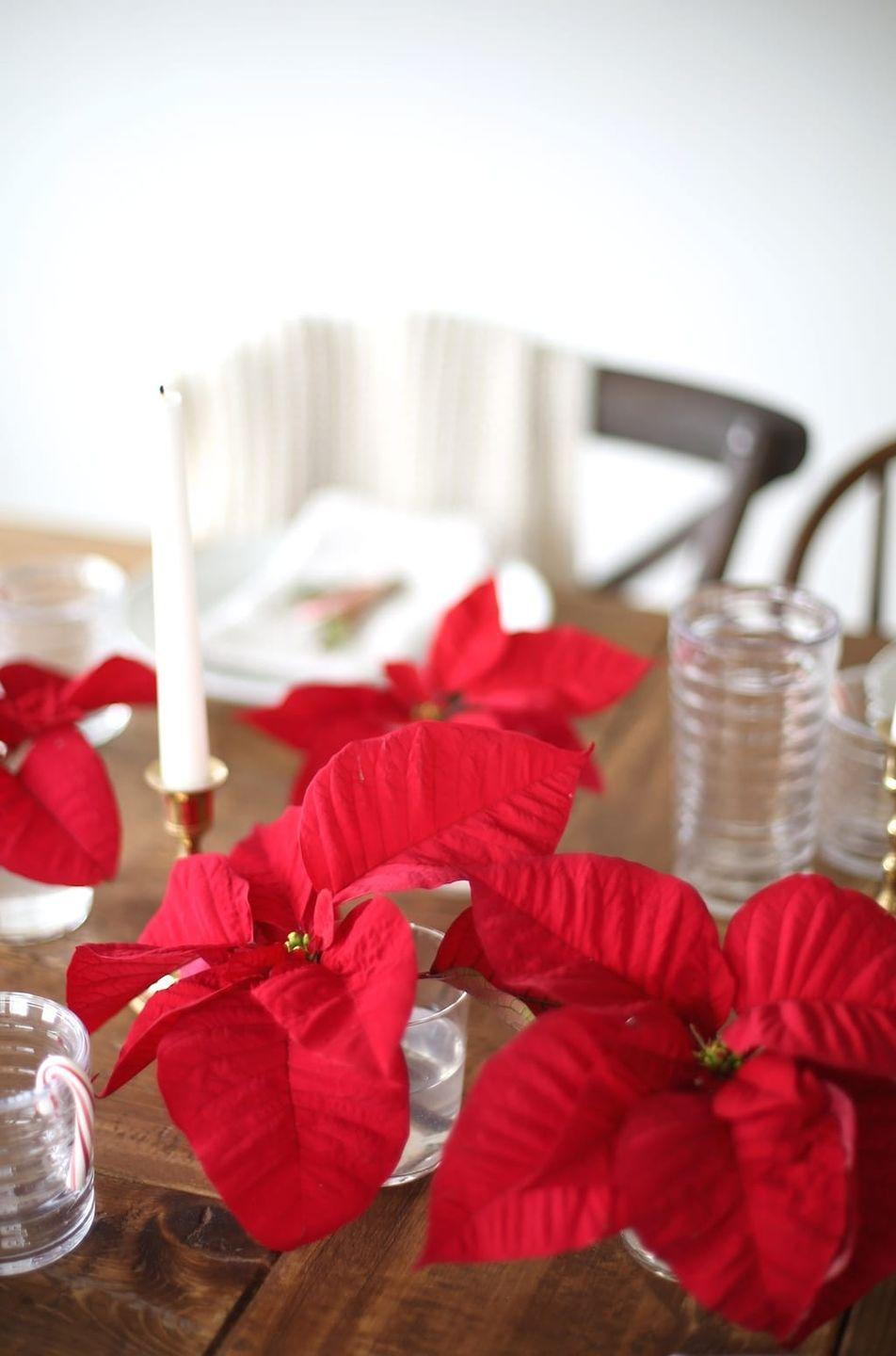"<p>Looking for a striking centerpiece for a small or rustic wedding? Snip off single flowers from a poinsettia plant, and place in decorative vases to line the center of the table. One plant yields lots of blooms, so you won't break the bank on your floral budget. </p><p><strong>See more at <a href=""https://julieblanner.com/poinsettia-centerpiece/"" rel=""nofollow noopener"" target=""_blank"" data-ylk=""slk:Julie Blanner"" class=""link rapid-noclick-resp"">Julie Blanner</a>.</strong></p>"