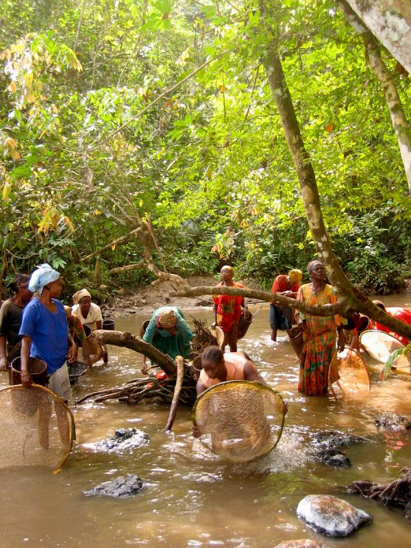Bantou and Baka women fishing shrimps in a river on the edge of Lobéké National Park. The Jengi project is providing support to local development and microprojects such as small-scale shrimp fishing.