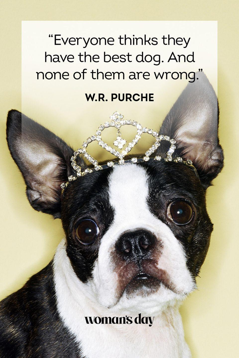 """<p>""""Everyone thinks they have the best dog. And none of them are wrong.""""</p>"""