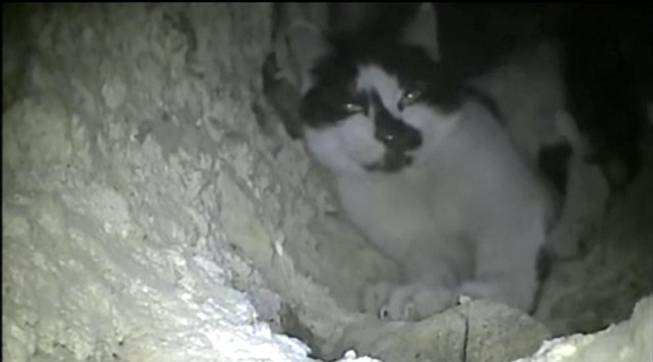 Cat Rescued From Chimney