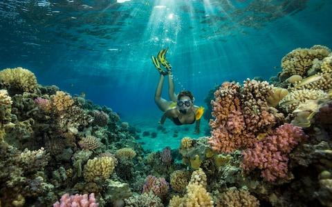 A girl free dives in the Red Sea, Egypt - Credit: Getty