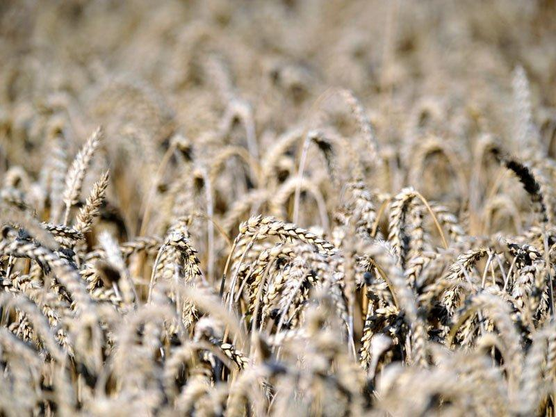 Brazil expects record grain harvest