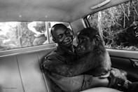 <p>Pikin, a lowland gorilla, had been captured and was going to be sold for bushmeat but was rescued by Ape Action Africa. Jo-Anne took this photograph as the gorilla was being moved from her former enclosure within a safe forest sanctuary in Cameroon to a new and larger one, along with a group of gorilla companions. She was first sedated, but during the transfer to the new enclosure she awoke. Luckily, she was not only very drowsy, but she was also in the arms of her caretaker, Appolinaire Ndohoudou, and so she remained calm for the duration of the bumpy drive. (Wildlife Photographer of the Year) </p>