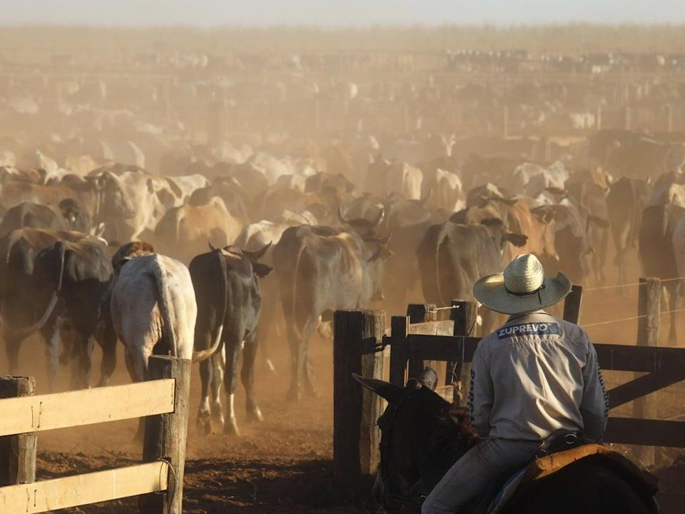 Brazil, where 175 million hectares is dedicated to raising cattle, is one of the world's largest exporters of red meat (Getty Images)