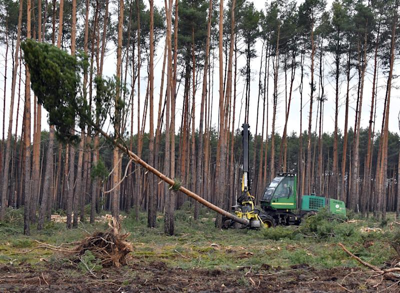 Tesla allowed to clear trees for German factory