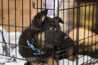"""<p>If your dog is crate trained, this is a good opportunity to re-start crating them again for short intervals during the day. </p><p>""""Pet parents can also put their pet into a crate or secluded room and designate that as the safe zone,"""" Dr. Jennifer Freeman, PetSmart's resident veterinarian, says. """"Establish this area as a safe area by giving lots of praise when they willingly enter the area."""" <br></p>"""