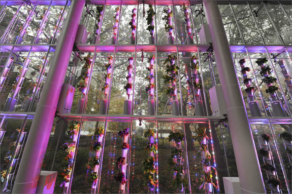 """An 18-foot-tall hydroponic vertical plant growing system has been installed at the American Museum of Natural History in New York, in honor of the new exhibition """"Our Global Kitchen: Food, Nature, Culture,"""" opening Nov. 17."""